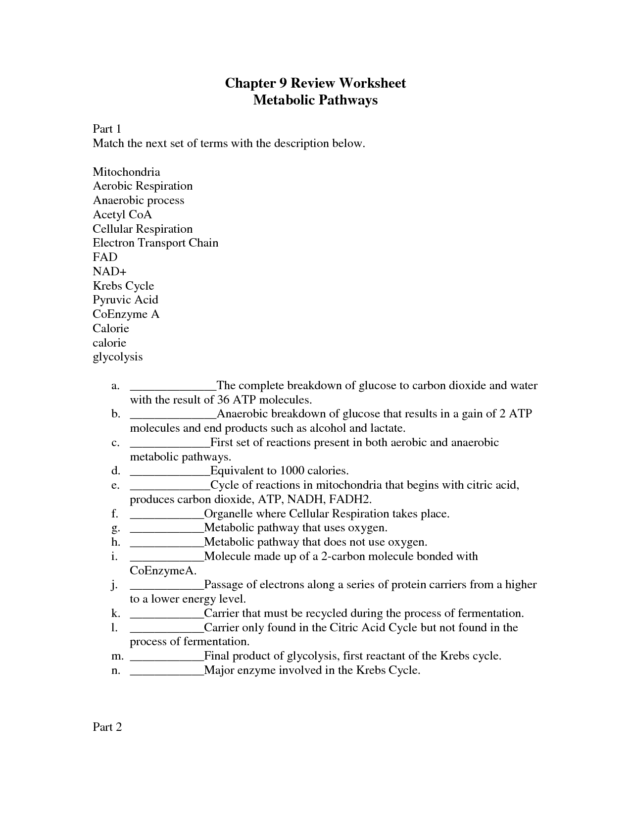 Cell Energy Worksheet Answers