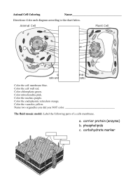 13 Best Images of Printable Worksheets Cells - Animal Cell ...