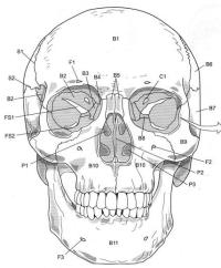 12 Best Images of Anatomy Practice Worksheets - Skull ...