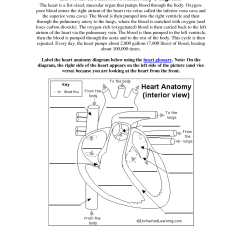 Heart Anatomy Diagram Worksheet 97 Cherokee Radio Wiring 13 Best Images Of Label