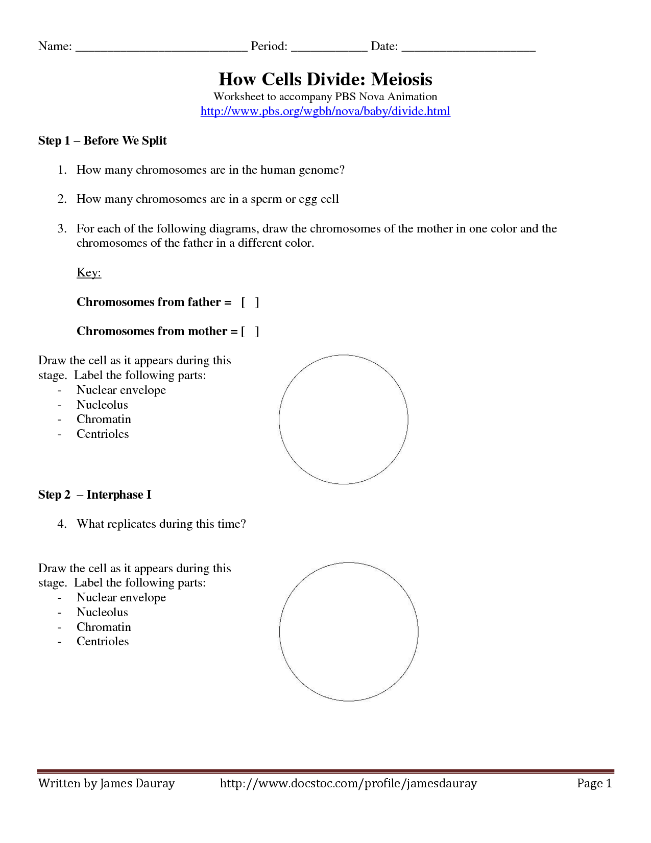 15 Best Images Of Mitosis And Meiosis Worksheet High