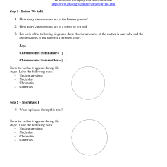 Meiosis Diagram Worksheet 2001 Saturn Sc2 Ignition Wiring 15 Best Images Of Mitosis And High