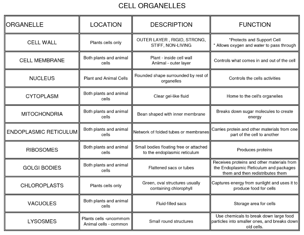 plant cell animal venn diagram sanyo tv schematic 16 best images of 7th grade science worksheets on cells - life worksheet ...