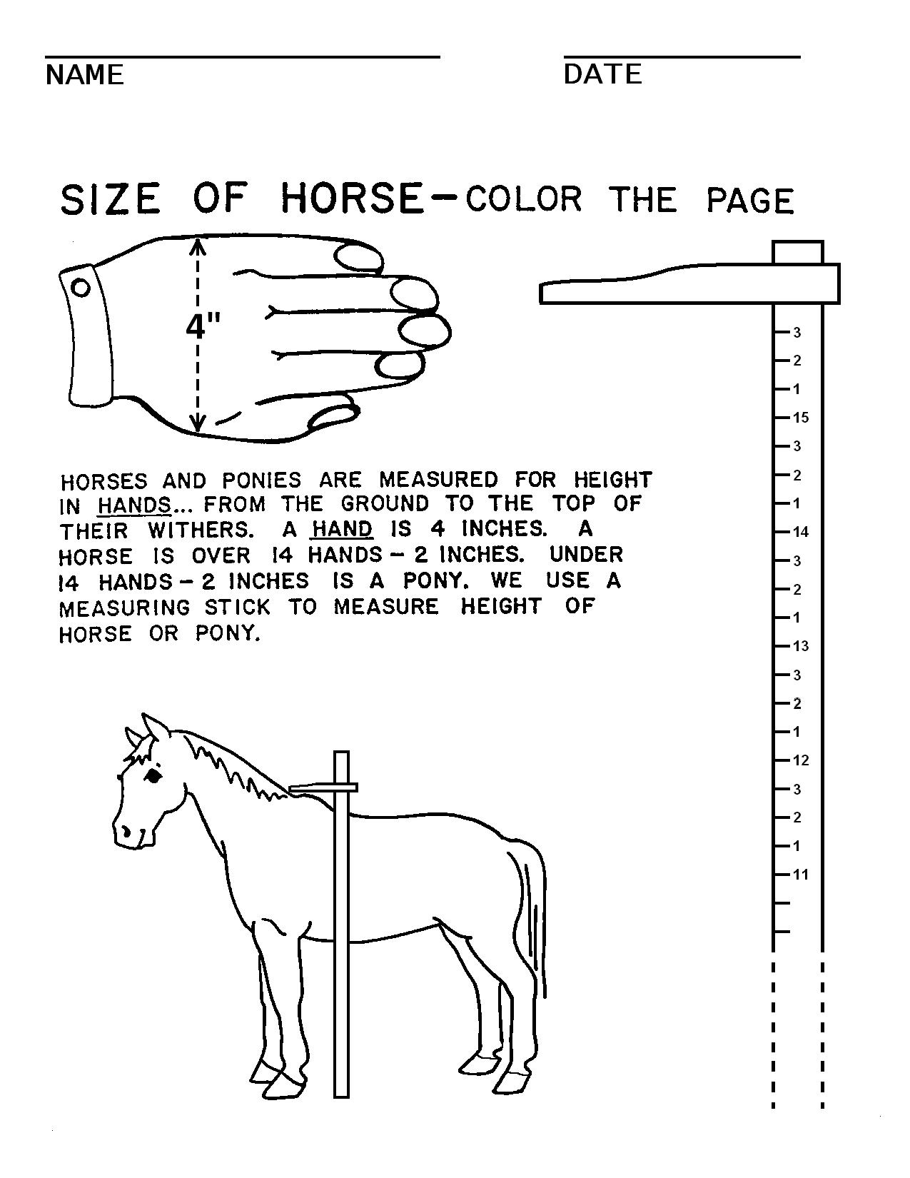 19 Best Images Of Worksheet Parts Of A Horse Pony Club