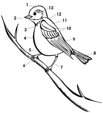16 Best Images of Bird Parts Worksheet For Preschool