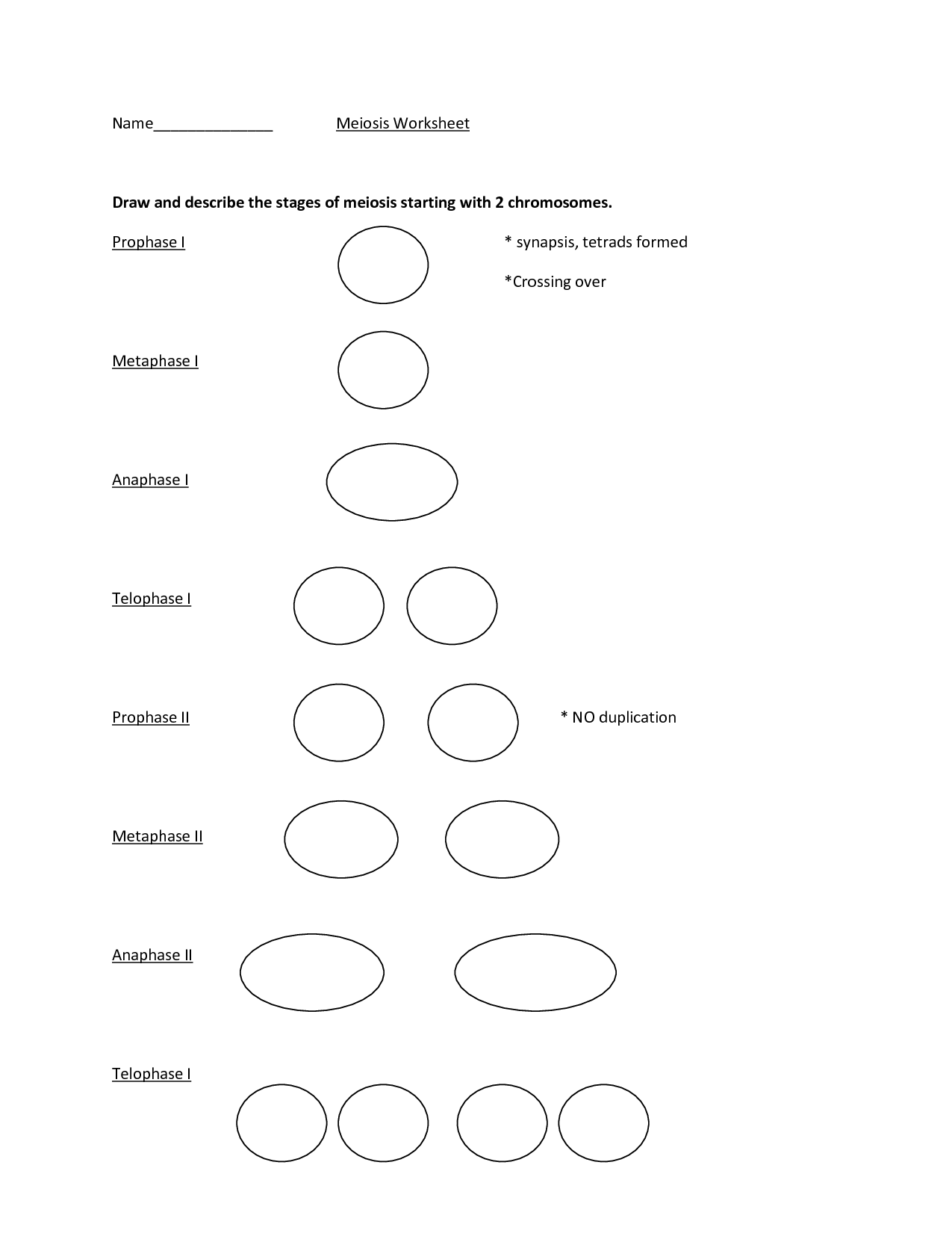15 Best Images Of Meiosis Stages Worksheet Answers