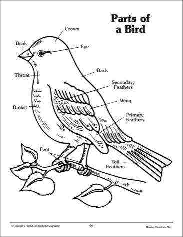 Preschool Worksheet Label Bird. Preschool. Best Free