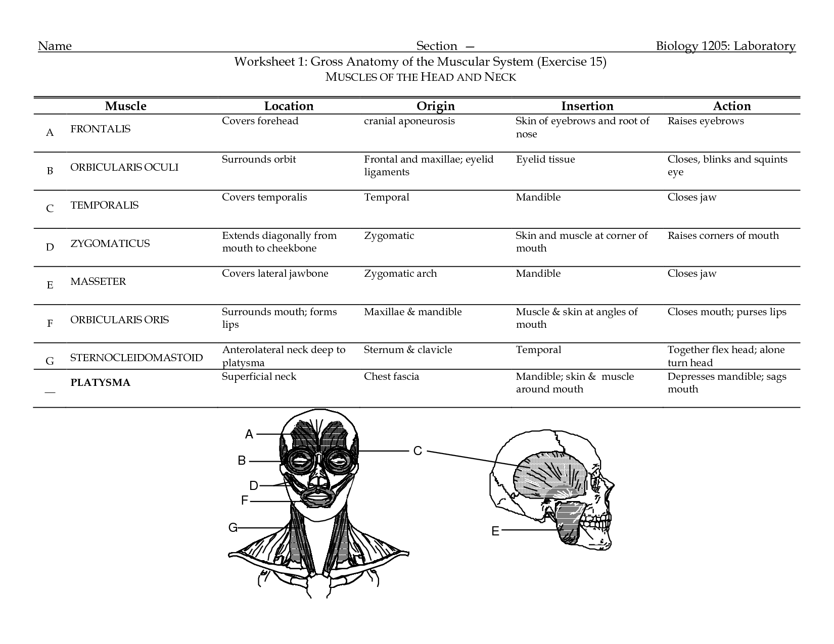12 Best Images Of My Face Worksheet