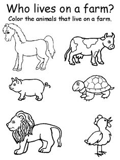 15 Best Images of Graphing Animal Worksheets For