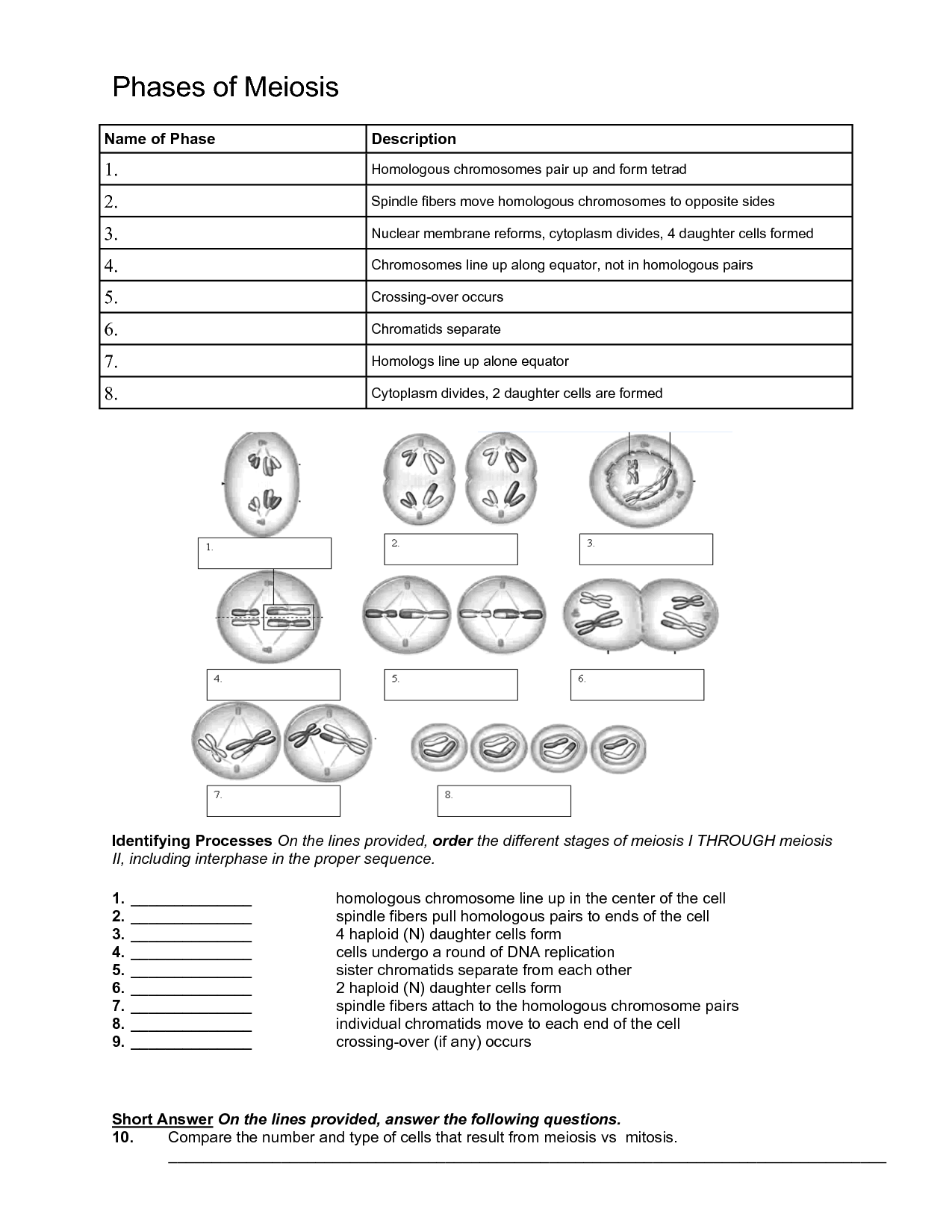 14 Best Images Of Biology If Worksheet Answer Key