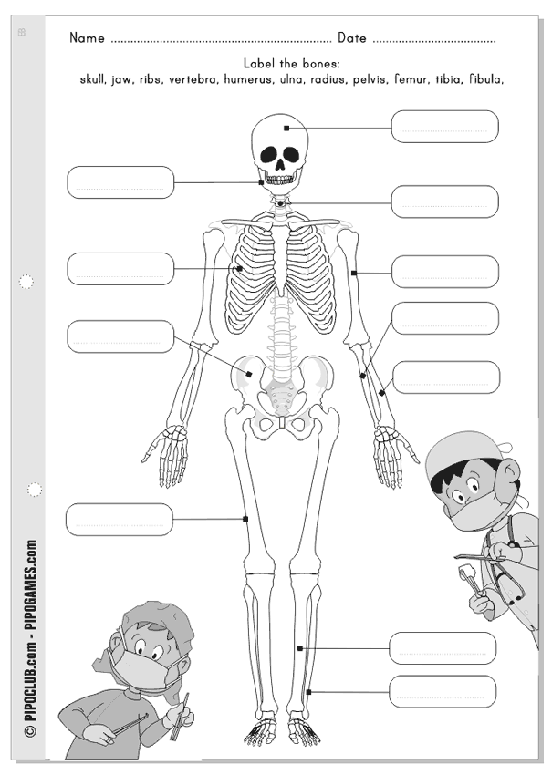 15 Best Images of Elementary Muscles Worksheets Printable