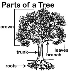 Easy Tree Diagram Worksheet Editable Venn With Lines 9 Best Images Of Label The Parts A Worksheets