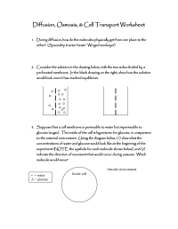 10 Best Images of Looking Inside Cells Worksheet Answers ...