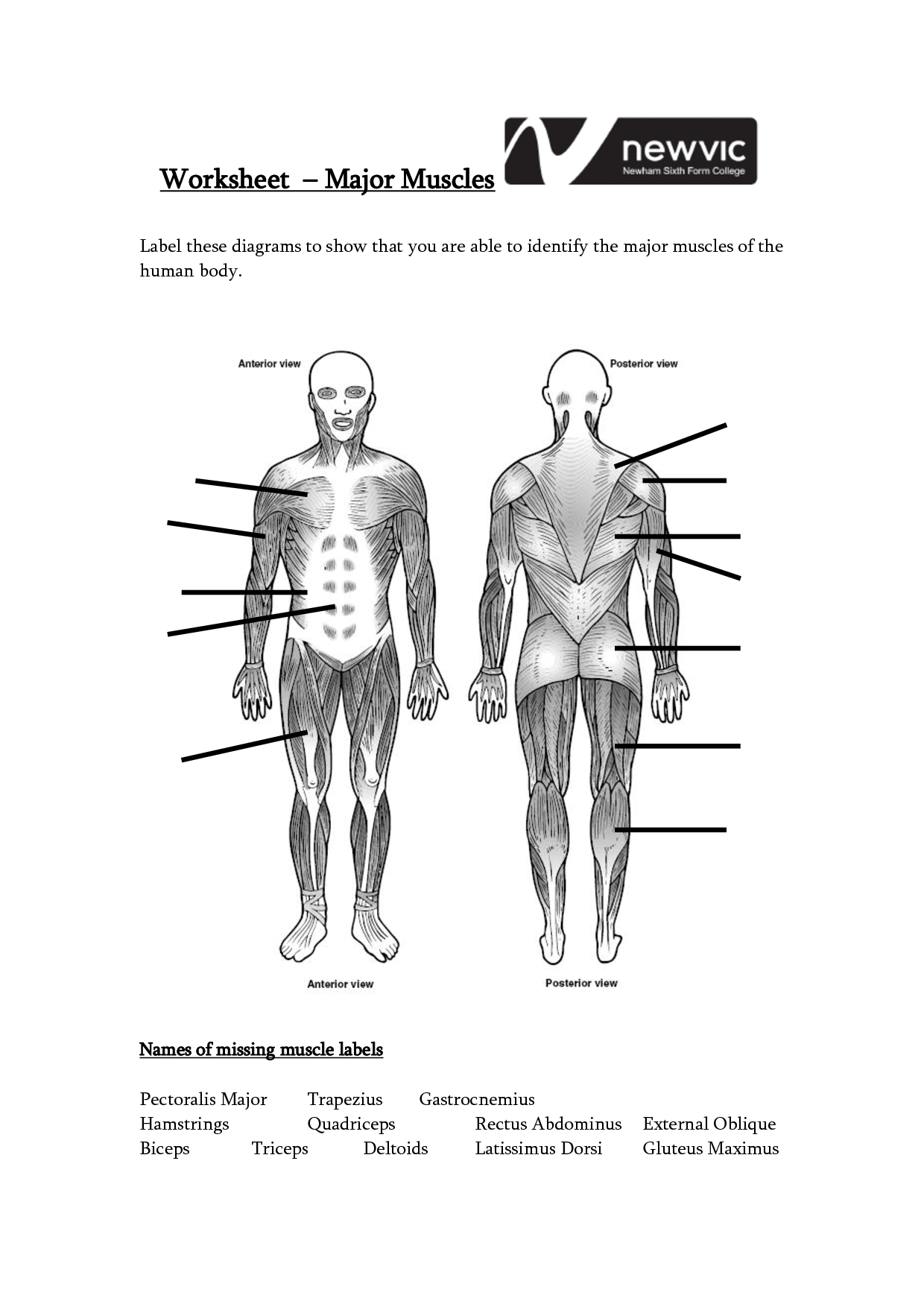 Printable Human Body Diagram Injury