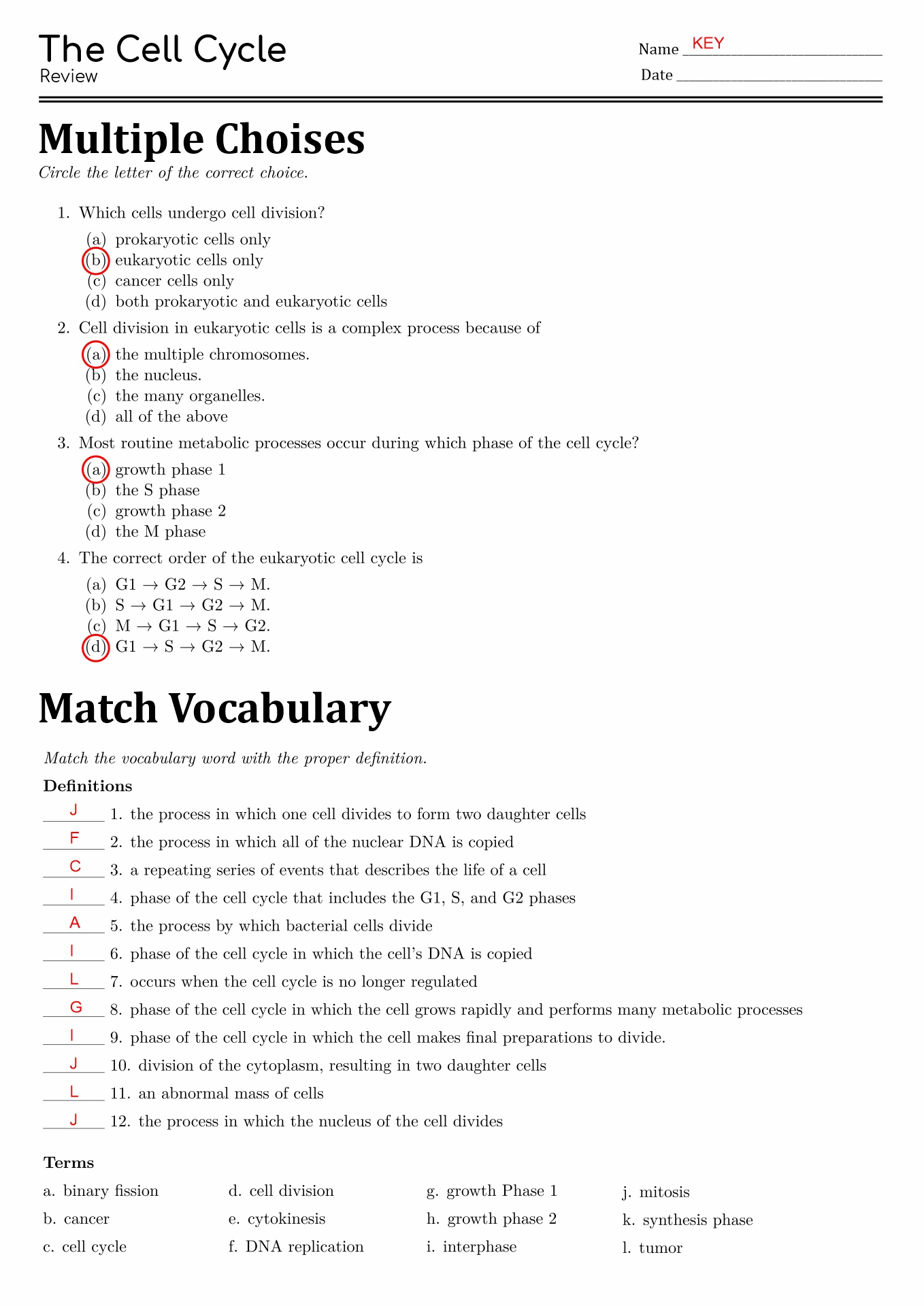 13 Best Images Of The Cell Cycle Worksheet Study Guide