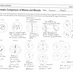 Simple Diagram Of Meiosis 1978 Evinrude 70 Hp Wiring 12 Best Images Life Science Worksheet Answer Cell