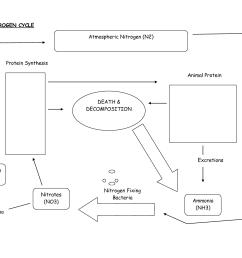 nitrogen cycle diagram worksheet [ 1650 x 1275 Pixel ]
