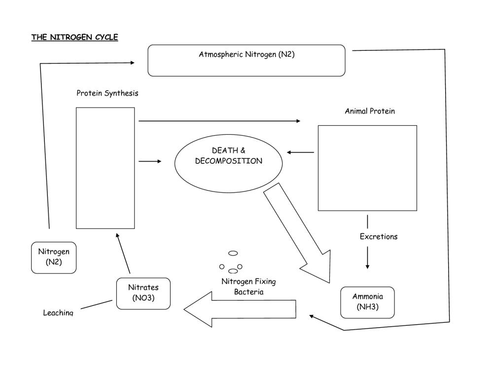medium resolution of nitrogen cycle diagram worksheet