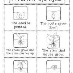 Lima Bean Seed Diagram Leeson Iec Motor Dimensions 14 Best Images Of Preschool Plant Life Cycle Worksheet - Kindergarten ...