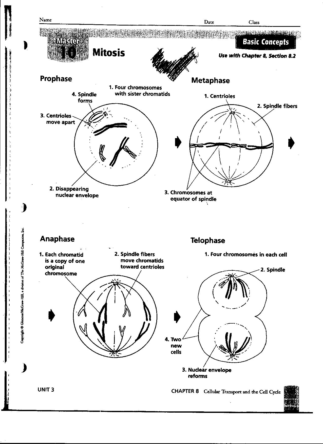 meiosis diagram worksheet vectra b mid wiring 14 best images of photosynthesis worksheets with answer key - cellular ...