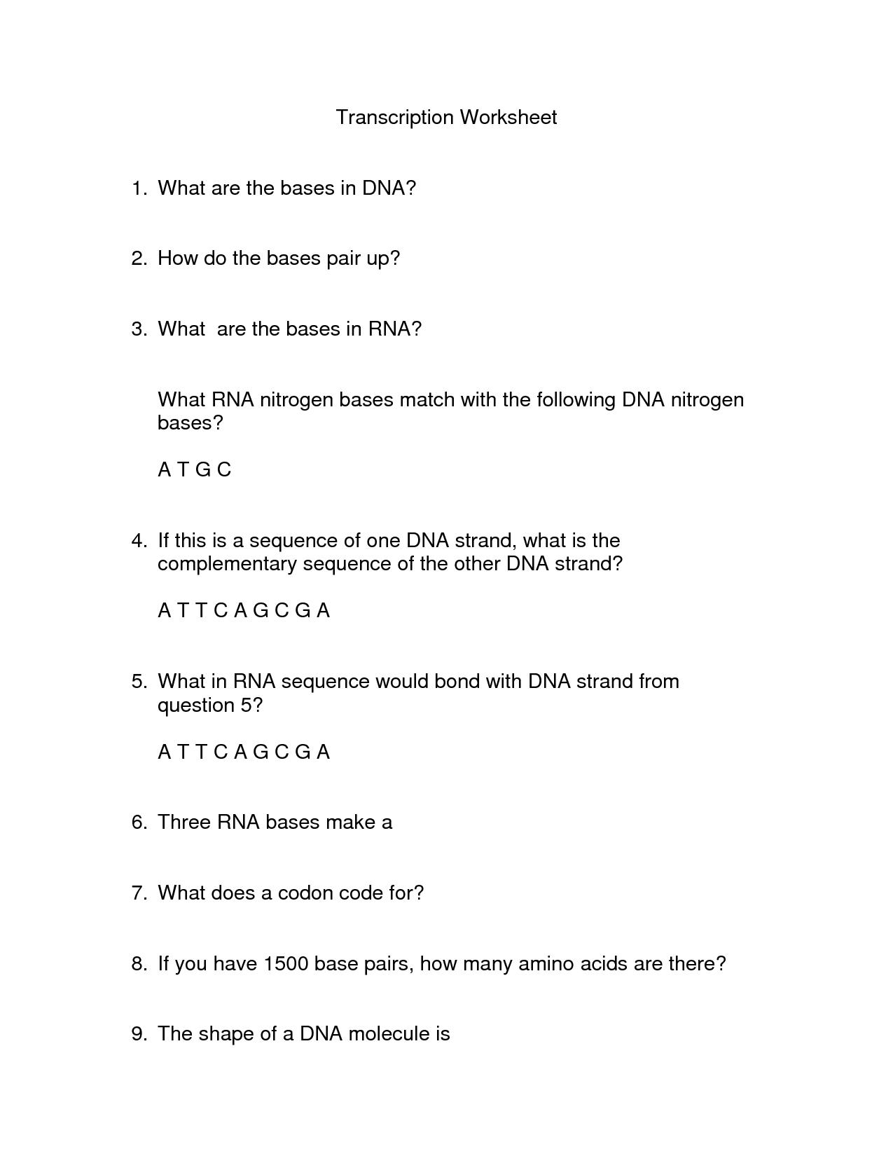 Dna Base Pairing Worksheet Answer