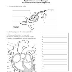 Blank Nerve Diagram 1997 Yamaha Warrior 350 Wiring 15 Best Images Of Heart Labeling Worksheet