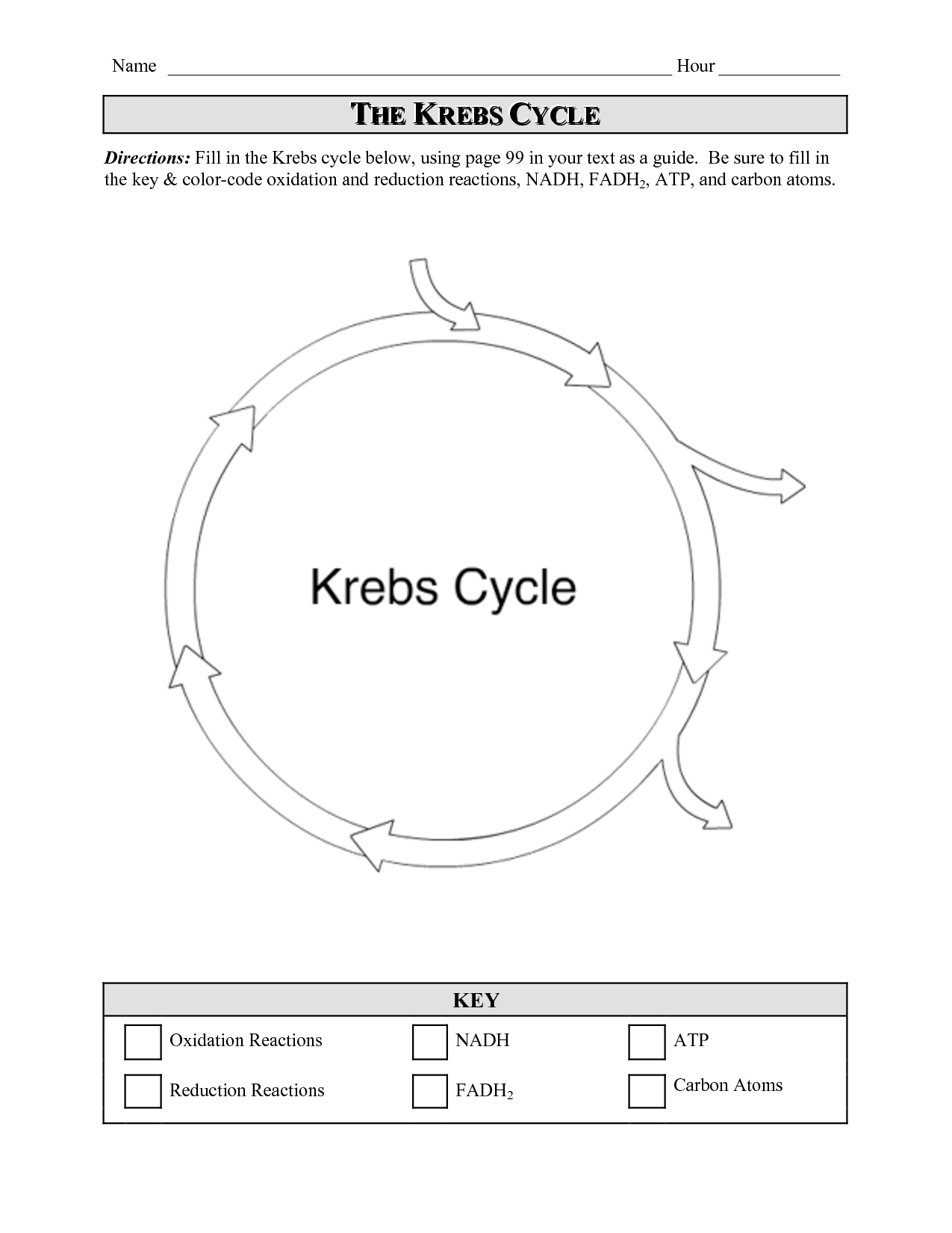 16 Best Images Of Krebs Cycle Worksheets