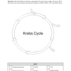 Blank Electron Transport Chain Diagram 2004 Grand Cherokee Wiring 16 Best Images Of Krebs Cycle Worksheets