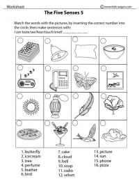 12 Best Images of Worksheets On Senses - Five Senses ...