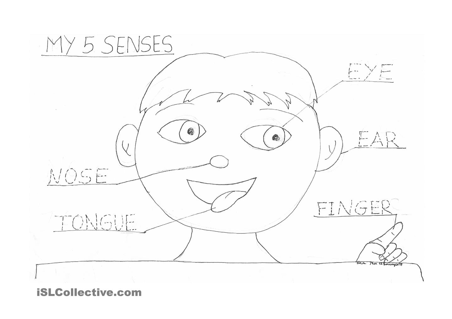 Sense Smell Worksheet Kindergarten