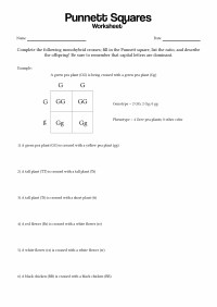 15 Best Images of Punnett Square Worksheet Answer Key ...