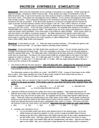14 Best Images of Protein Synthesis Worksheet Answer Key ...