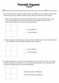 15 Best Images of Punnett Square Worksheet Answer Key ...