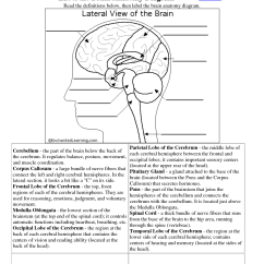 Brain Diagram Without Labels Potentiometer With Spst Switch Wiring 7 Best Images Of Functions The Worksheet