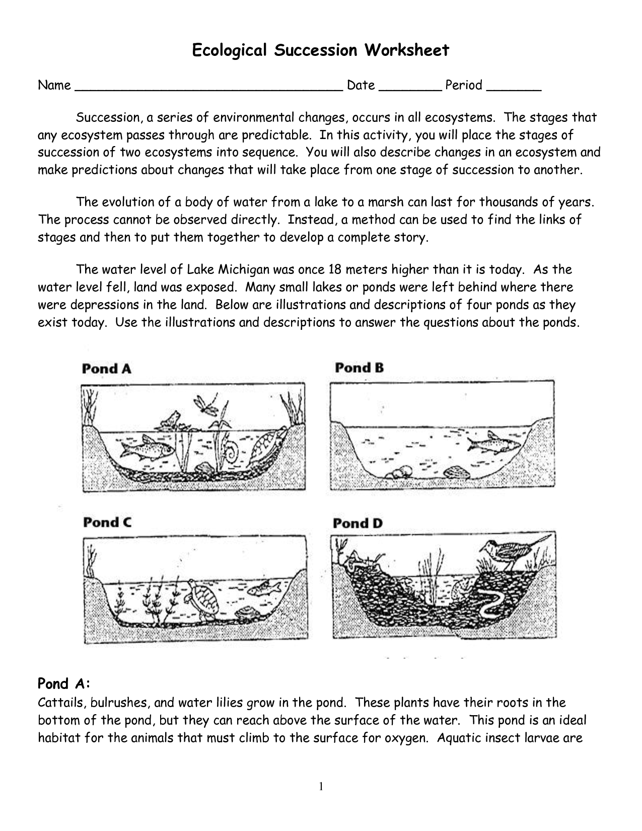 12 Best Images Of Communities And Ecosystems Worksheets