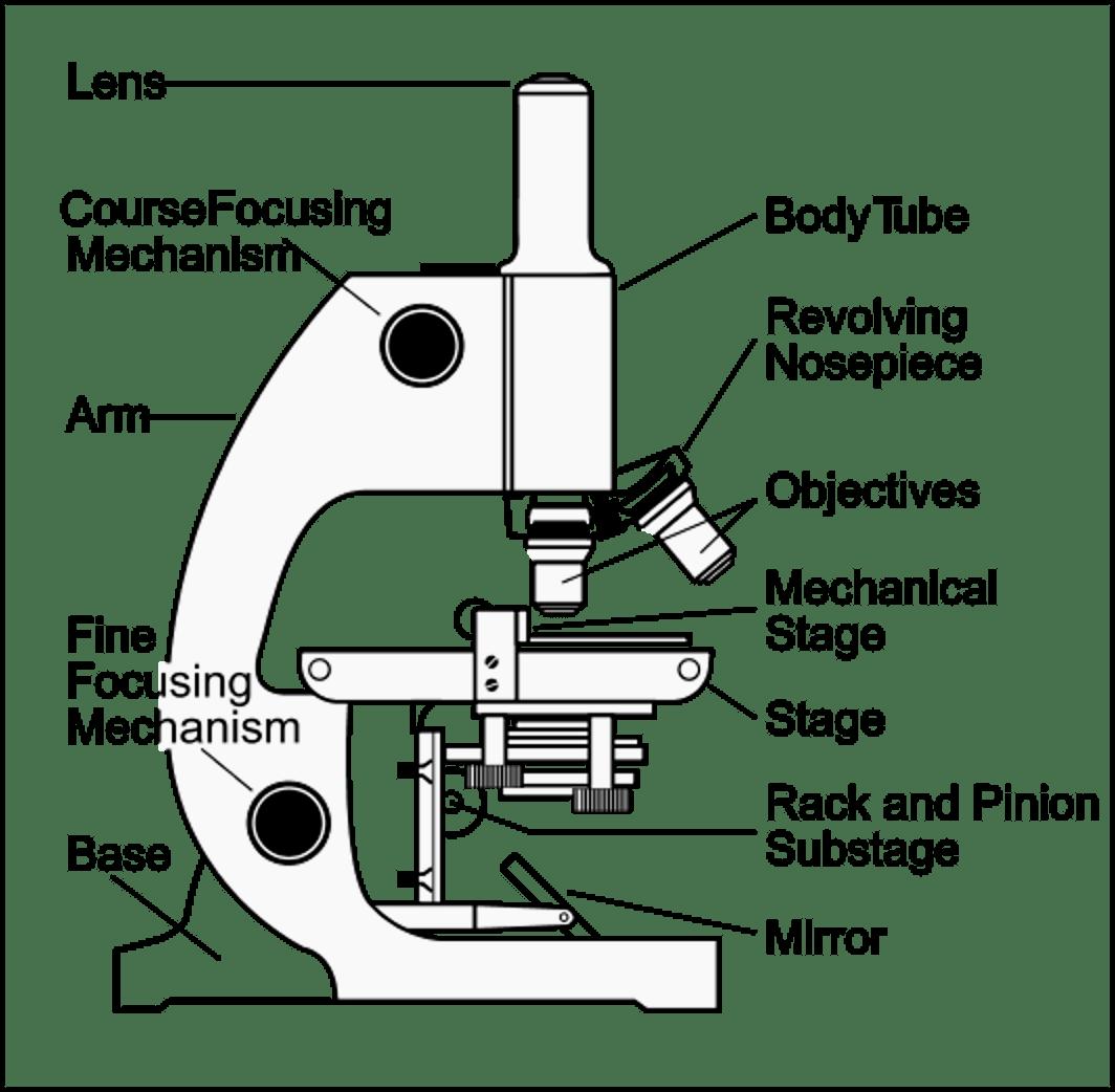 compound light microscope diagram worksheet 1997 buick lesabre belt 16 best images of simple labeling