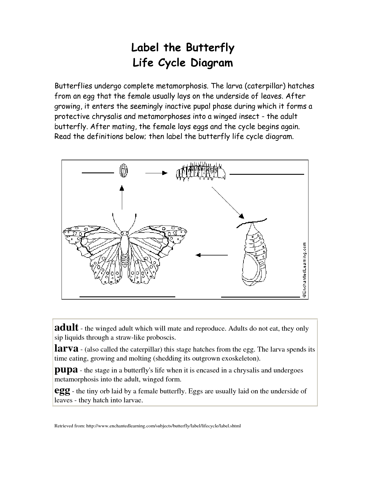 diagram of an ant life cycle worksheet 7 pin flat trailer connector wiring 17 best images butterfly label