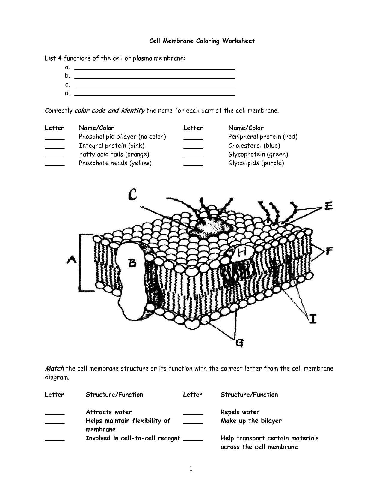 10 Best Images Of Cell Membrane Diagram Worksheet