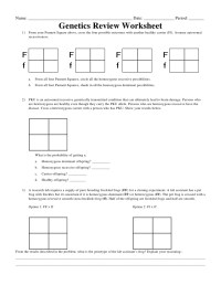 √ Punnett Square Worksheet With Answers