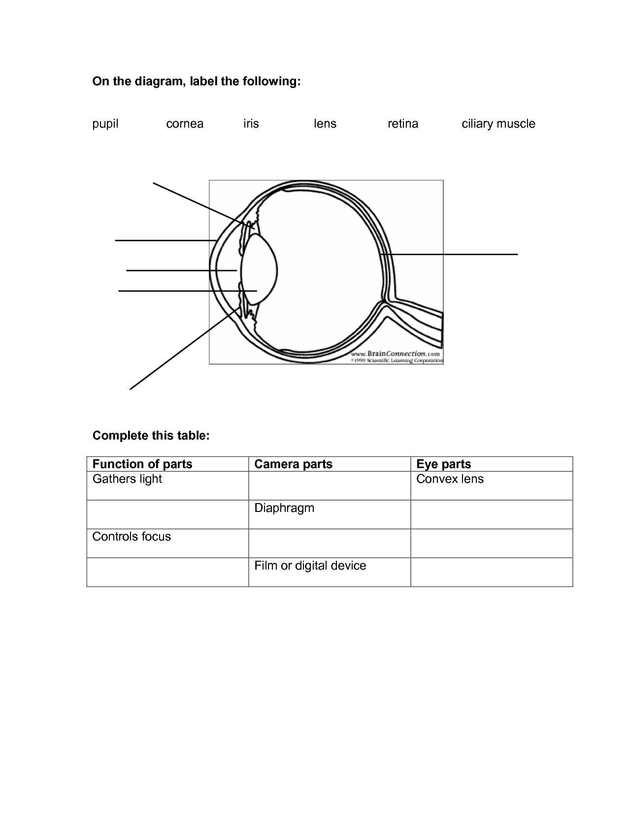 8 Best Images Of Lens Diagram Worksheet