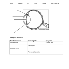 Human Eye Diagram Label Worksheet 2010 Cobalt Stereo Wiring The Checks