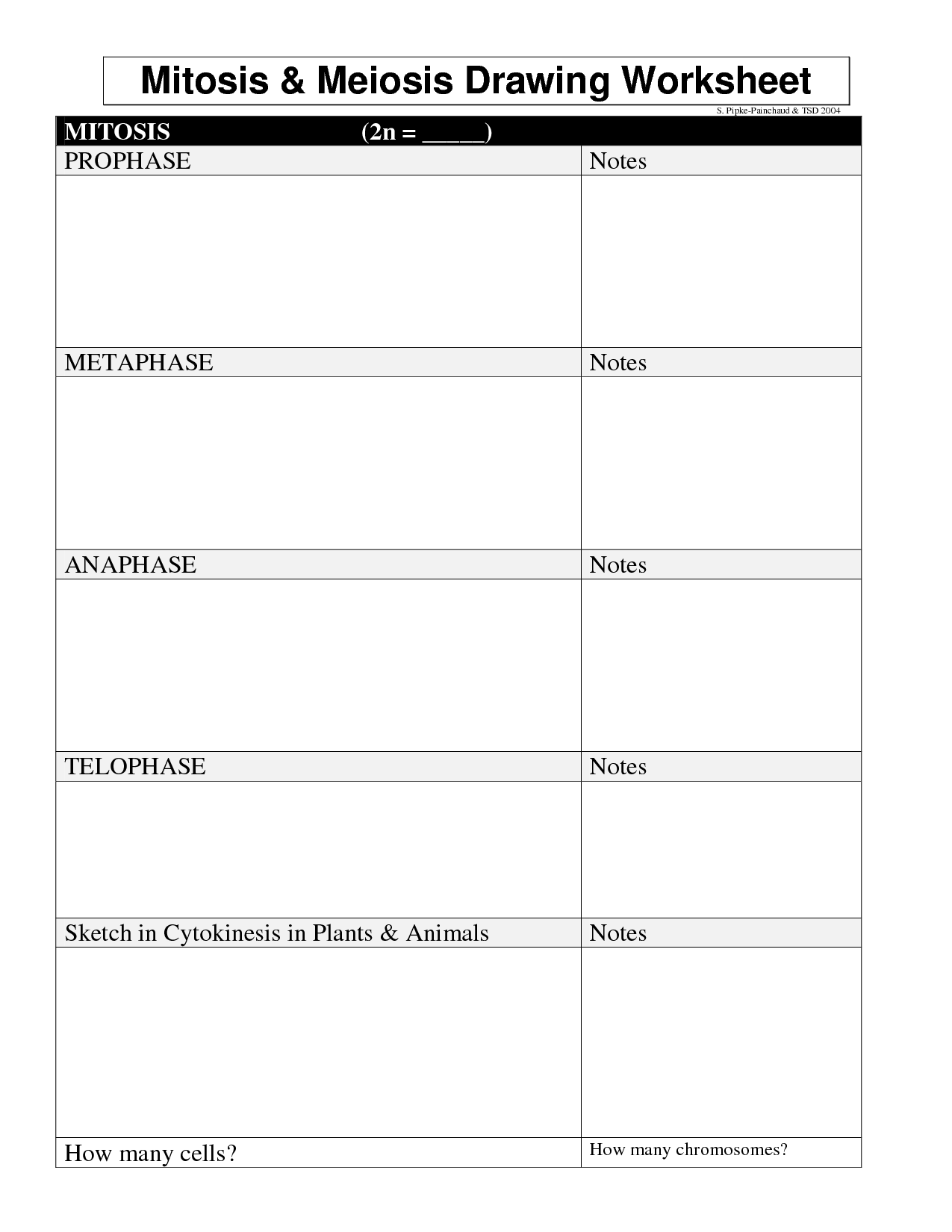13 Best Images Of Mitosis Notes Worksheet