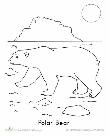 11 Best Images of Arctic Animals Activities And Worksheets
