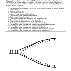 Simple Diagram Of Dna Replication Cutler Hammer 3 Phase Starter Wiring 16 Best Images Worksheet