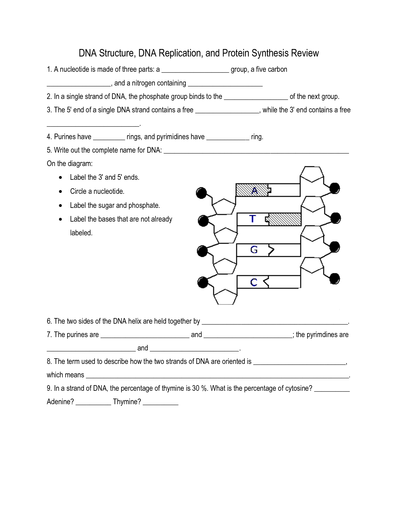 simple diagram of dna replication how to draw software architecture 16 best images worksheet
