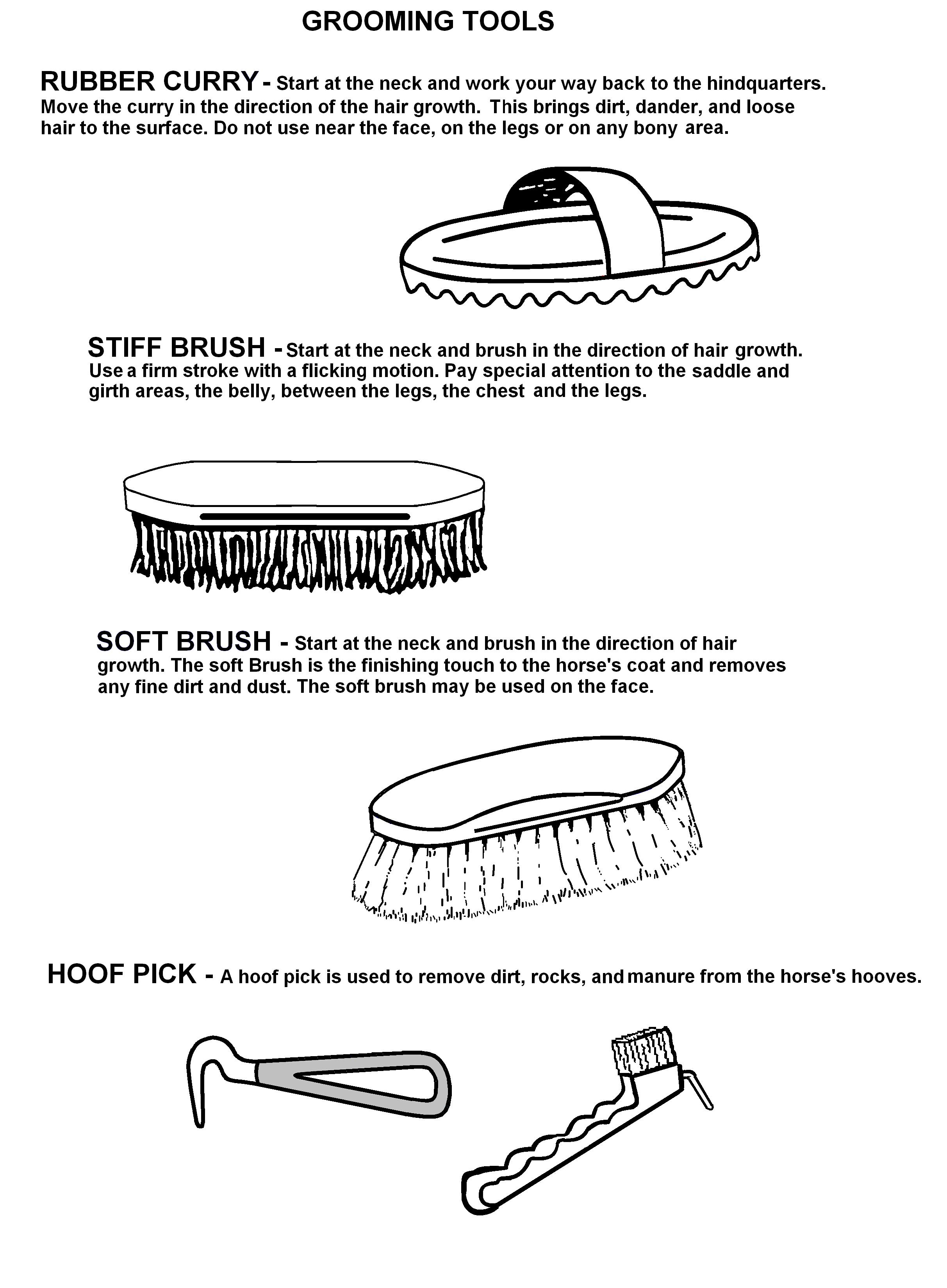 17 Best Images Of Horse Grooming Tools Worksheet