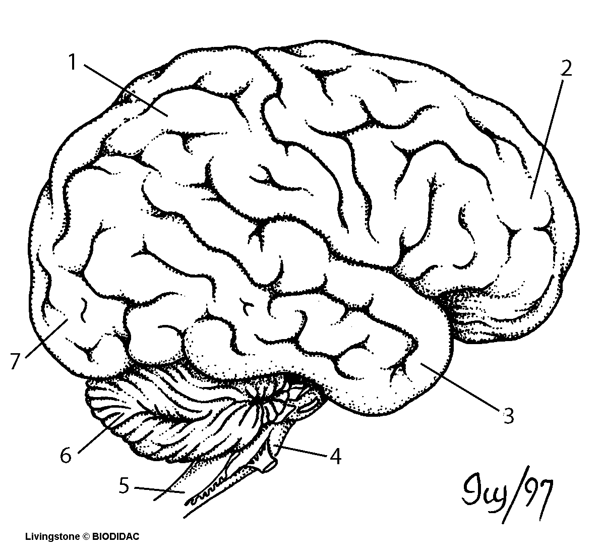 blank diagram of synapse led wiring with switch 7 best images neuron label worksheet