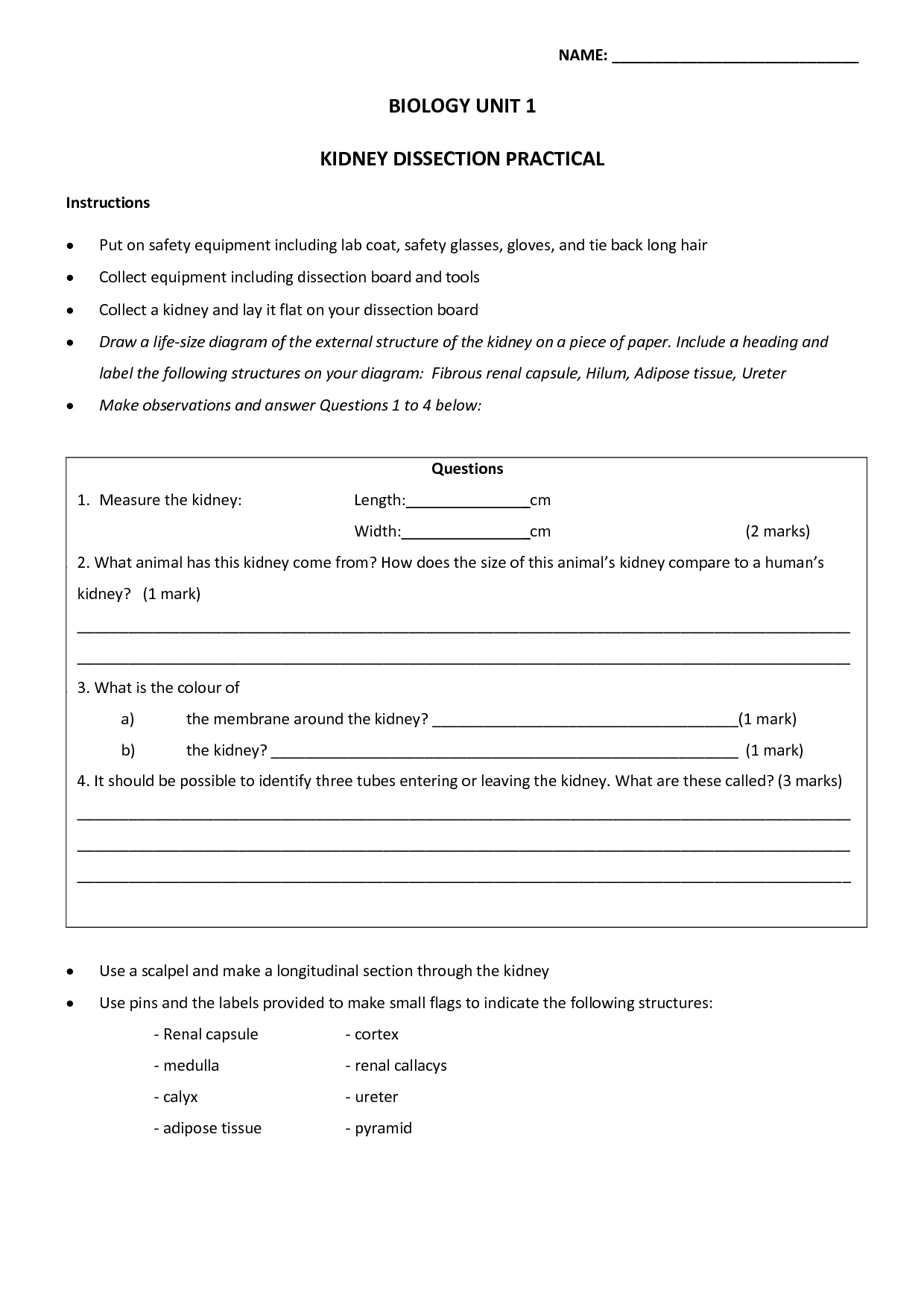 17 Best Images Of Science Lab Safety Worksheets High