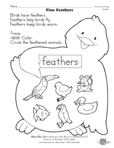 13 Best Images of Classification Worksheets Preschool