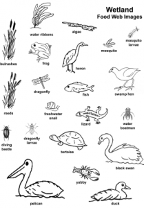 Food Chains And Food Webs Worksheets Pdf food chain